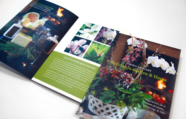 Comella Design Group | American Plant Holiday Catalog